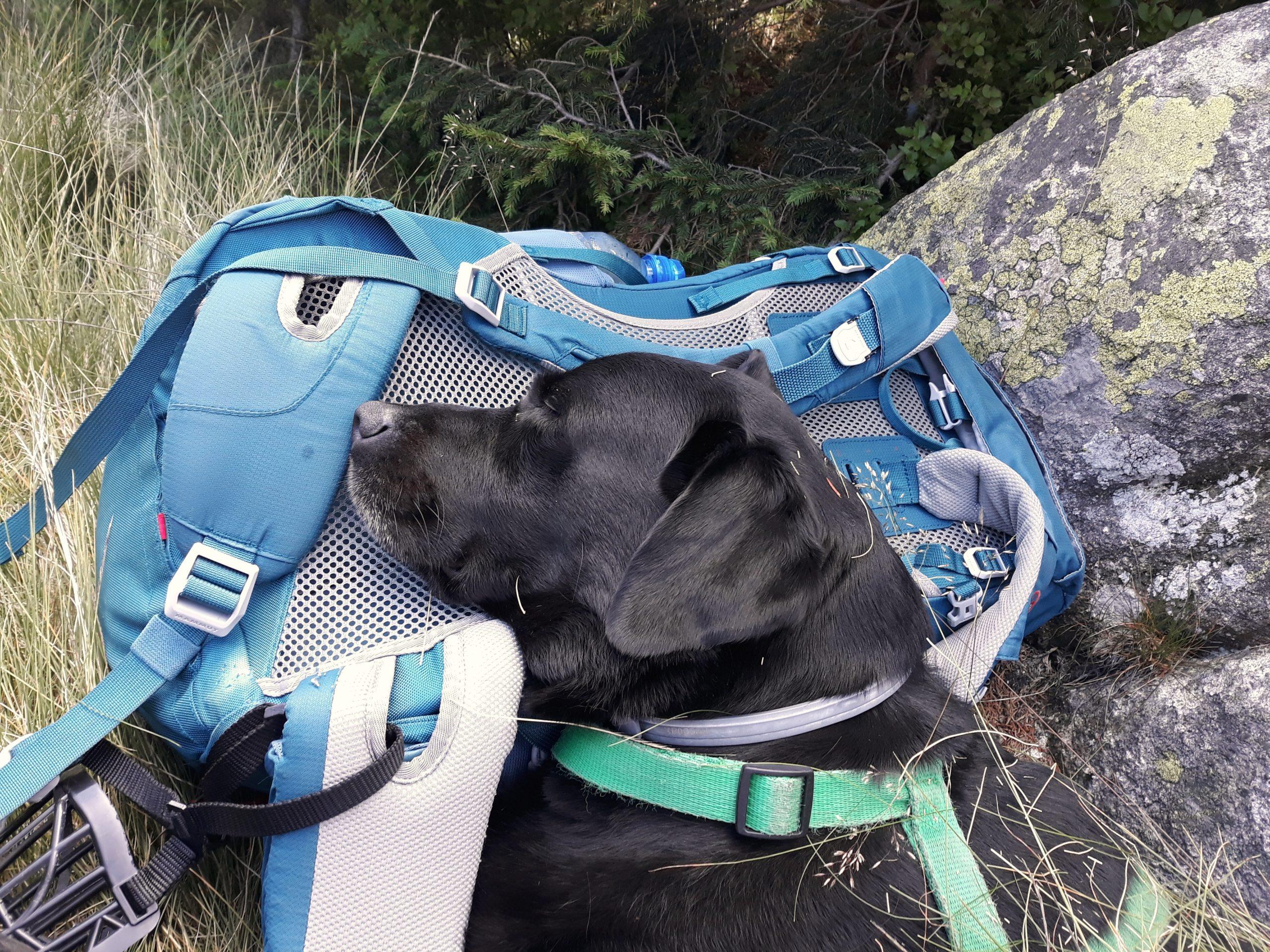 spanie z psem w górach