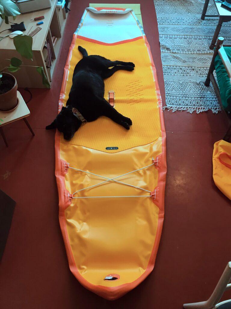 duży pies na SUP
