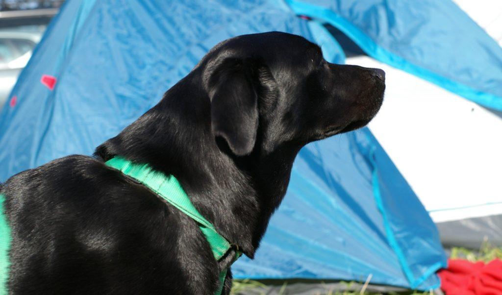 pierwsze chwile Jussi na polu namiotowym