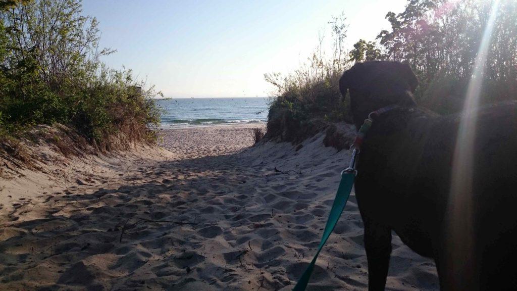 nad morze z psem
